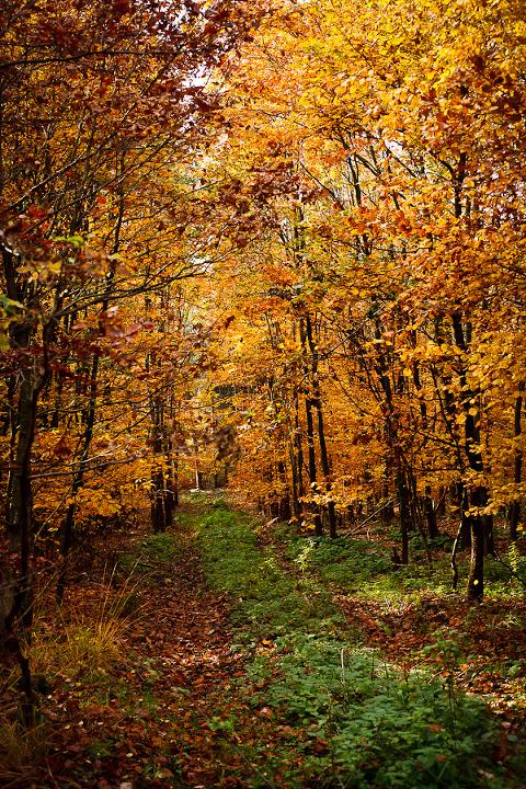 Ich liebe die leuchtenden Farben im Herbst :-)