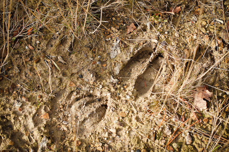 Ganz alleine schienen wir auf unserem Weg nicht gewesen zu sein, wie zahlreiche Abdrücke in dem lehmigen Boden bewiesen.