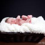 Janosch – Neugeborenenfotos in Barsinghausen